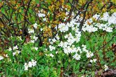 Spring in the Vilnius city - bush in the field Royalty Free Stock Image