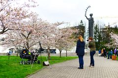 Spring in Vilnius city with sakura blossom Stock Photography