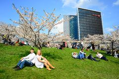 Spring in Vilnius city with sakura blossom Stock Photos