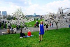 Spring in Vilnius city with sakura blossom Stock Photography