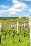 Spring vineyard, Czech Republic Stock Photo
