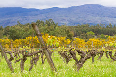Spring vineyard in mountains Stock Images