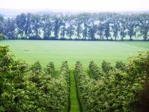 Spring vineyard view Royalty Free Stock Images