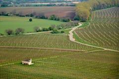 Spring vineyards Royalty Free Stock Images