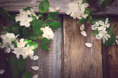 Spring vintage background with flowering branches of apple, tint Stock Images