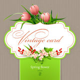 Spring  vintage elegant card with  flowers. Vector illustration Royalty Free Stock Images
