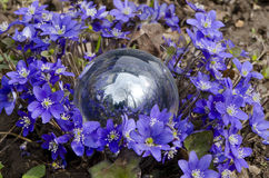 Spring violet flowers and crystal glass ball Stock Images