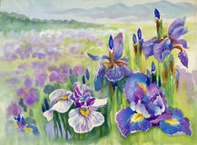 Spring violet flowers on mountain. Painted watercolor with spring violet flowers and landscape Stock Photos