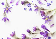 Spring violet flowers on a white background royalty free stock photos
