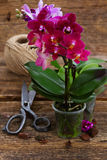 Spring  violet orchids Royalty Free Stock Images