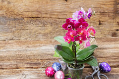 Spring  violet orchids Stock Photography