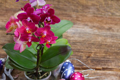 Spring  violet orchids Royalty Free Stock Photography