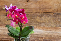 Spring  violet orchids Stock Image