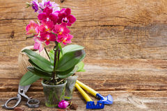 Spring  violet orchids Royalty Free Stock Image