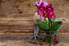 Spring  violet orchids Royalty Free Stock Photo