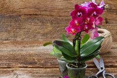 Spring  violet orchids Royalty Free Stock Photos
