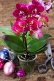 Spring  violet orchids Stock Images