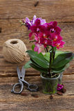Spring  violet orchids Stock Photo