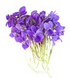 Spring violets Royalty Free Stock Photography