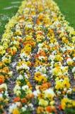 Spring violets Stock Photo
