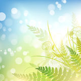 Spring vitality. Spring background with green fern over blue sky Royalty Free Stock Photos
