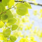 Spring Vitality Leaves Stock Photography