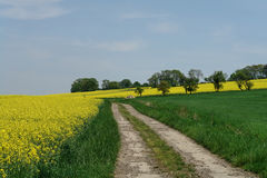 Spring Walk. Walking on country lanes through yellow rape fields and green meadows in the Lorraine area of France on a May day Royalty Free Stock Image