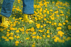 Spring walks on meadow full of flowers Stock Photography