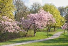 Spring Walkway Stock Image