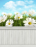 Spring wall background/backdrop Royalty Free Stock Photo