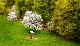 Spring wallpaper. Spring bulgarian forest; nature spring wallpaper Stock Images