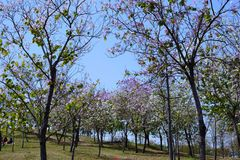 Blooming flowers. In spring, it was taken in Songshan Lake Ecological Garden in Dongguan Stock Image