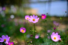 Blooming flowers. In spring, it was taken in Songshan Lake Ecological Garden in Dongguan Royalty Free Stock Images