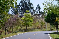 Green Road. In spring, it was taken in Songshan Lake Ecological Garden in Dongguan Stock Photography