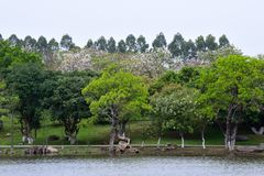 The scenery by the lake. In spring, it was taken in the Songshan Lake Scenic Area in Dongguan Royalty Free Stock Photo