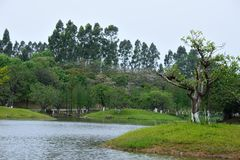 The scenery by the lake. In spring, it was taken in the Songshan Lake Scenic Area in Dongguan Stock Photos