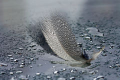 Spring of a water bird with water drops Royalty Free Stock Photo