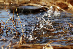 Spring water drops texture fresh Stock Images