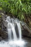 Spring water falls. White thread like lines spring water under green plants Stock Images