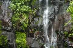 Spring water falls. White thread like lines spring water which falls along a rock wall with green plants Royalty Free Stock Image