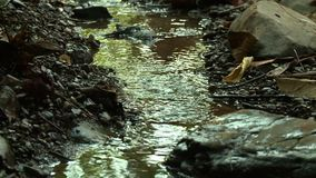 Spring water flowing on a forest stream, Myanmar. Close-up high-angle still shot of a stream of spring water flowing a low a shallow channel at a remote hilly stock video footage