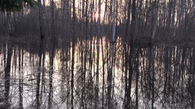 Spring water in forest and evening tree reflections. Spring melt water in forest and evening tree reflections stock video