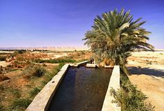 Spring of water near Dakhla oasis Royalty Free Stock Photo