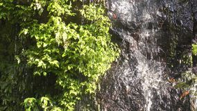 Spring water with plants. Spring water flowing down along a rock wall with green plants stock footage