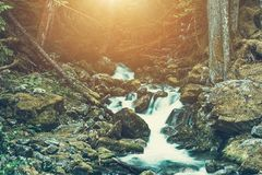 Spring Water River Royalty Free Stock Photography