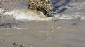 The spring water washes away all in its path. Element dirty water in the river in the spring after melting ice stock footage