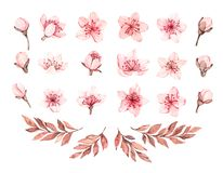 Spring watercolor illustration. Sakura bloom. Cherry. Botanical pink flowers and branches. Floral blossom elements. Perfect for