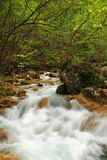 Spring waterfall. In morning forest Stock Photos