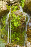Spring waterfall. A lovely split waterfall flows over several large brown stones covered in bright green foliage Royalty Free Stock Photography