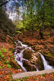 Spring waterfall and forest stream in mountains Stock Photos